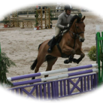 Norman Emerson Group Equestrian Sand