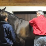 Horse Chiropractic – Keith Martin