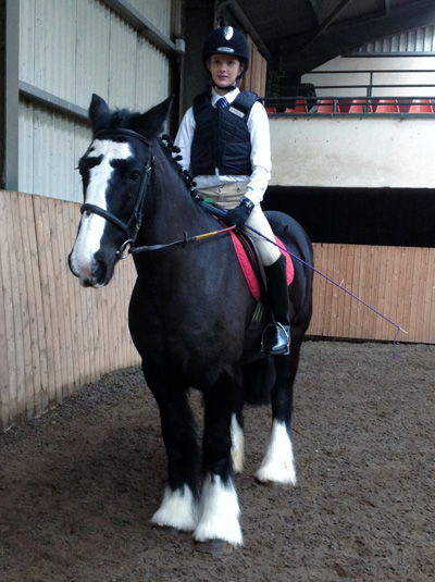Laurel View Equestrian Centre Equestrian News Ni