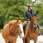 The British Horse Society And The Benefits It Brings To The Equine Industry