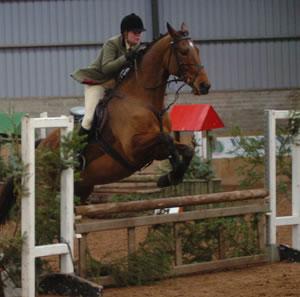 novice_horse