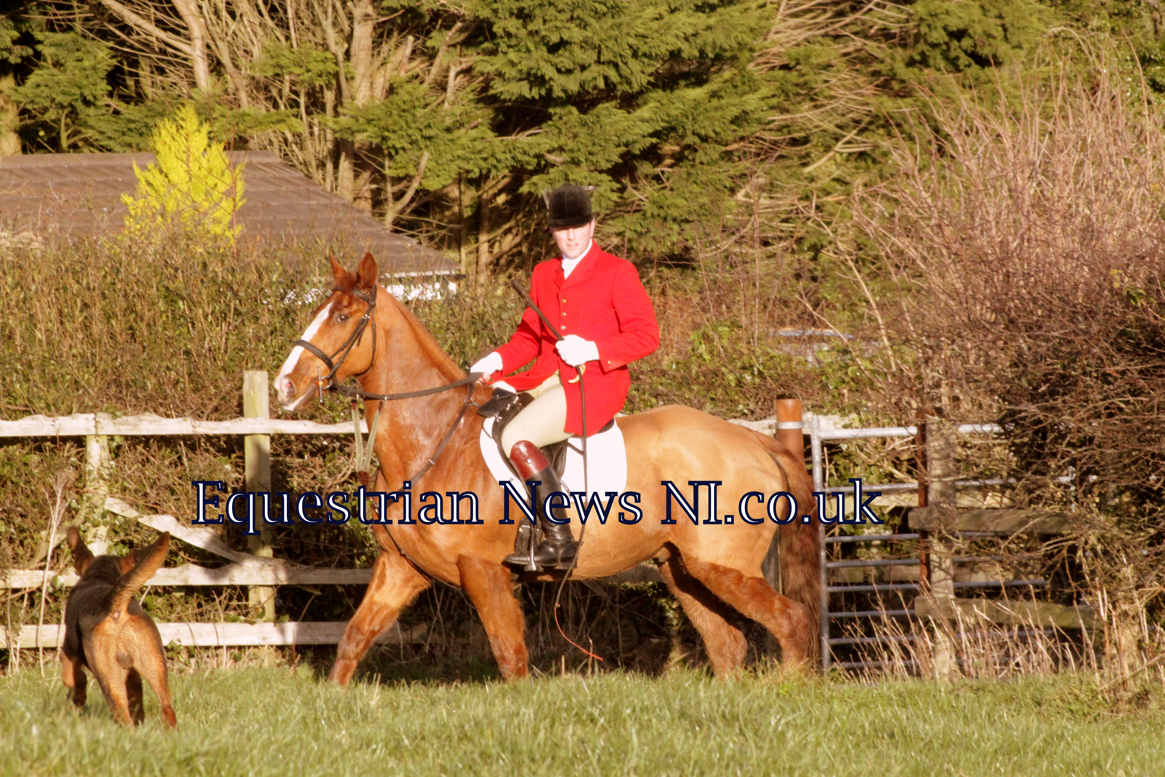 Boxing Day Drag Hunt in Ballynahinch