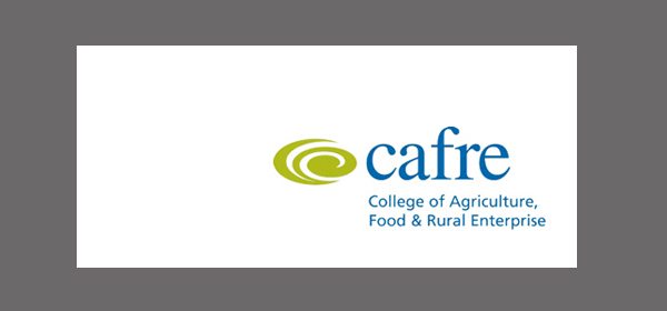 Online Equine Nutrition Course Offered by CAFRE