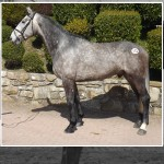 Cavan August Performance Horse & Pony & Premier 3 Year Old Sale