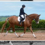 Great pairings at Laurel View Dressage