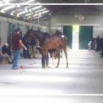 Records Smashed on Day 2 of August NH Sale