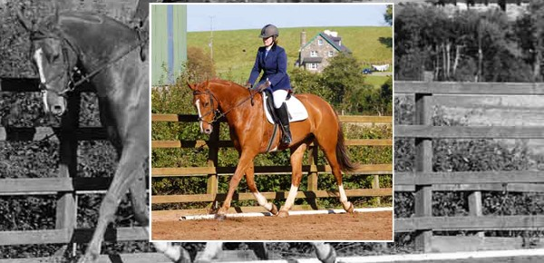 Mill Yard Dressage League Goes from Strength to Strength