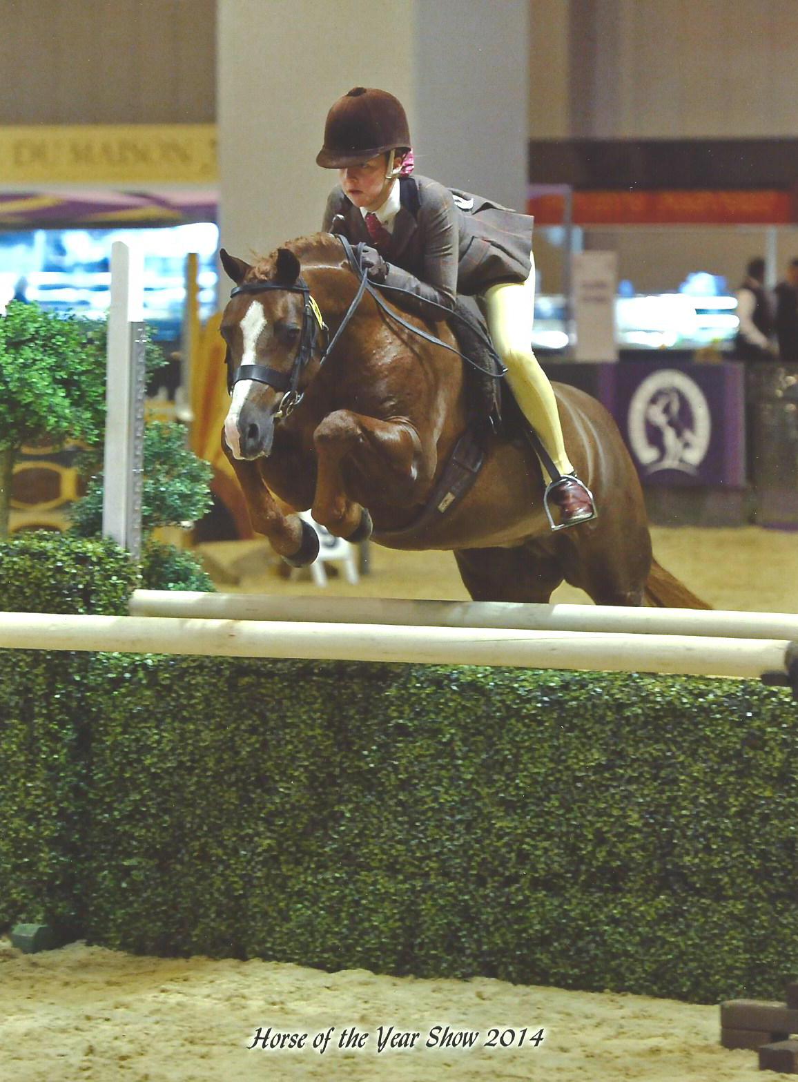HOYS Success for Co. Antrim School Girl : Equestrian News NI