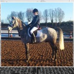 Iveagh Dengie Excel Week One Dressage
