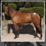 82 Percent Clearance at Cavans April Horse and Pony Sale