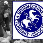 BEVA Trust Vets Support Horse Charity Projects