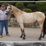Buoyant June Sale at Cavan Equestrian Centre