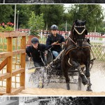 FEI World Driving Championships for Young Horses