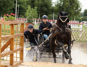 Franz Schiltz (LUX) drove Frodo, a son of Florestan I, to gold in the seven-year-old class at the FEI World Driving Championships for Young Horses at Mezőhegyes (HUN), finishing on a score of 16.46. (FEI/Krisztina Horváth)